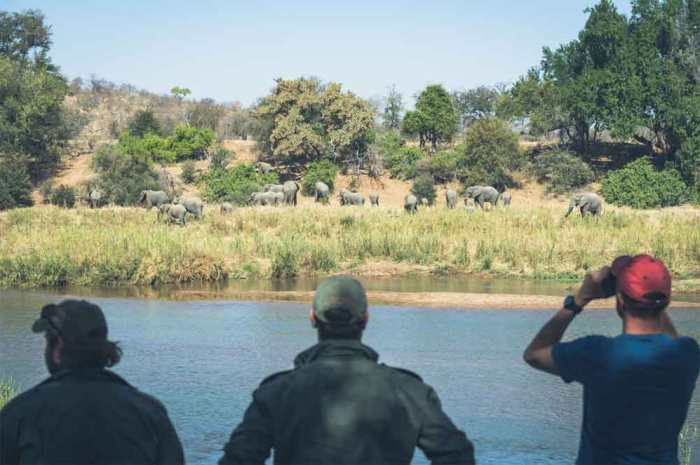Top 5 Walking Safaris in the Kruger National Park