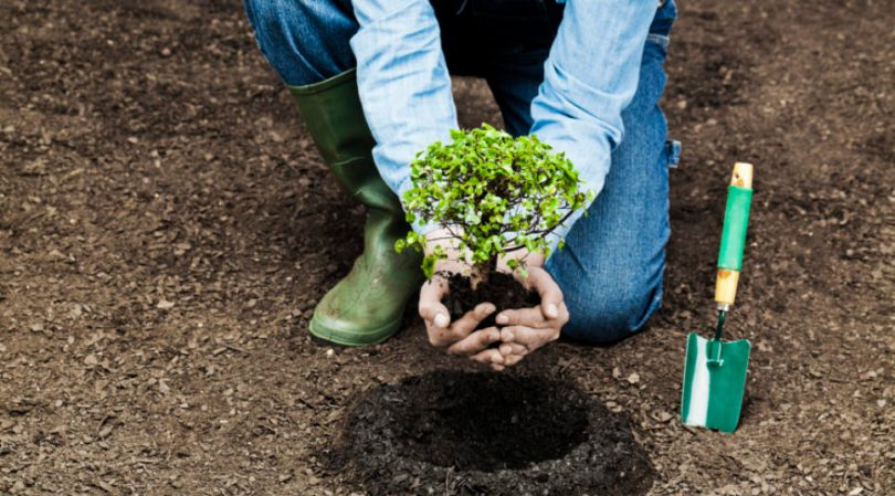 Planting a Small Tree