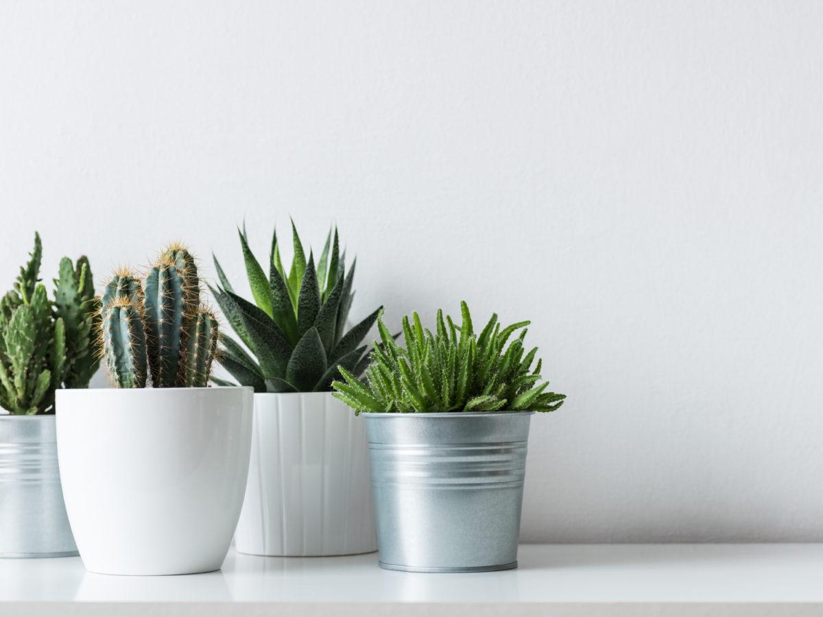 The Ikea Houseplant Section Top Deals On Cute Plants Pots Sunset Sunset Magazine