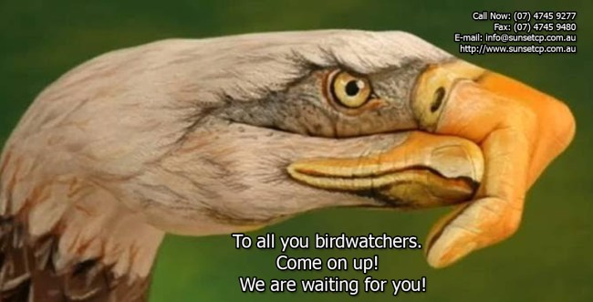 To all you birdwatchers
