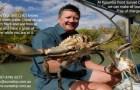 Karumba Crab Karumba Point Sunset Caravan Park Accommodation