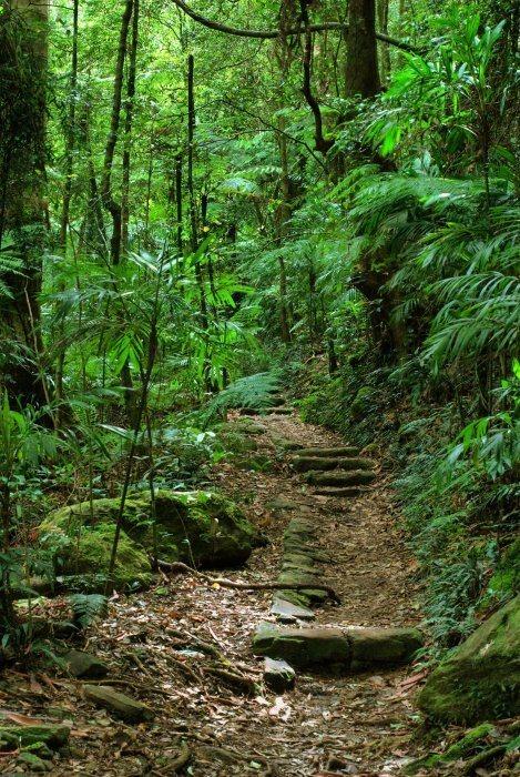 on't Go Off Track in the Bush Phtoo (C) Ralph Loesche Via Shutterstock