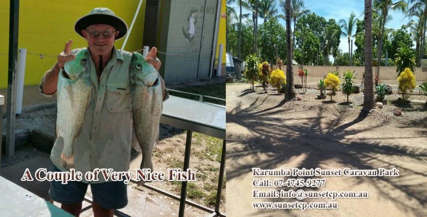 A couple of very nice fish Karumba Point Sunset Caravan Park