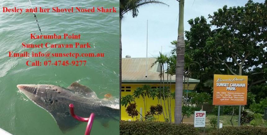 Desley and her showvel nosed shark Karumba Point Sunset Caravan Park