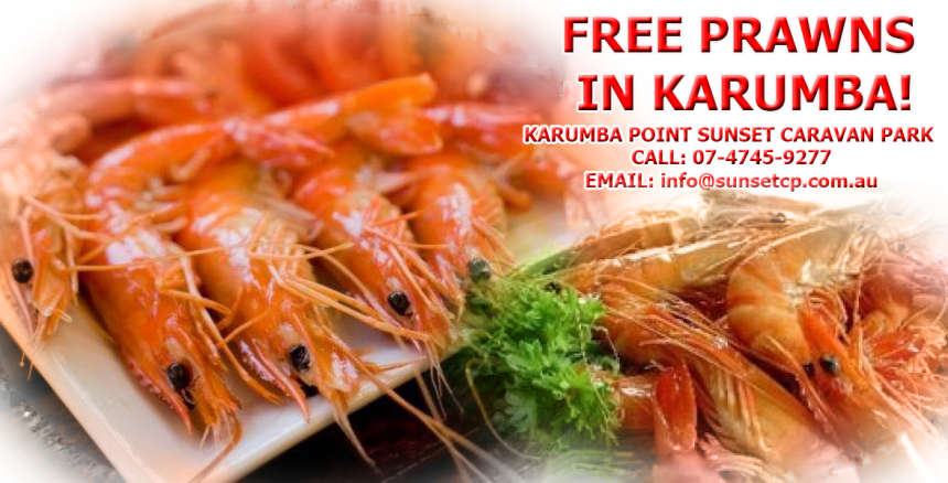 Free Prawns in Karumba Karumba Point Sunset Caravan Park