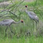 Karumba Tourist Attraction – Wildlife