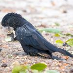 """Booking 28-12-2017 """"Good birding"""" Loved the place, bird life was excellent"""