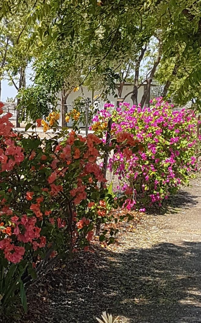 Karumba Point Sunset Caravan Park Beautiful Park Garden
