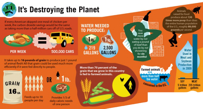 animal-facts-environment