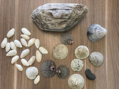 The Wave: Beach Combing
