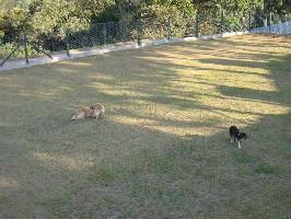 animais abrigo cães
