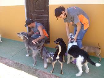 monitores brincando com os cães do asilo para cachorros