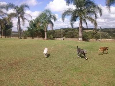 cachorros brincando no abrigo cachorros