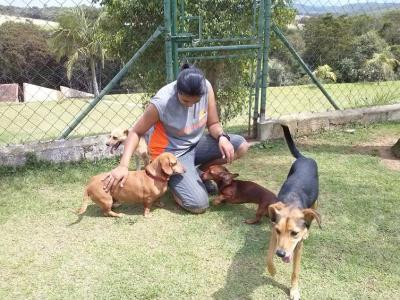 Monitor brincando com cachorros da doação de cães