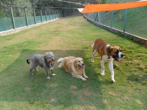 lar-temporario-cachorros-grandes