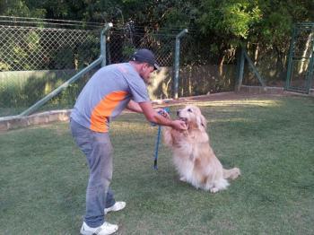 monitor brincando com golden retriever no hotel cachorro