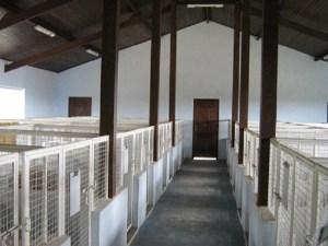 corredor canil pequenos hotelzinho cães