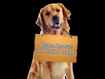 Telefone do asilo para cães