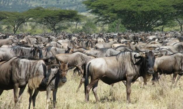 5 Day Safari, Manyara, Ngorongoro and Serengeti