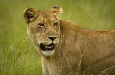 Queen Elizabeth Uganda Park Safari, 3 Days