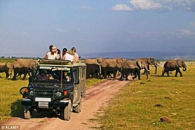 elephants at Tanzania