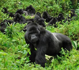 17 Day Gorillas Safari-Uganda, Wildlife Safari- Kenya/Tanzania