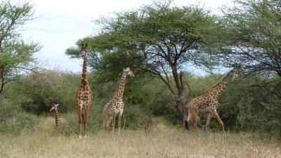 Serengeti Safari and Ngorongoro