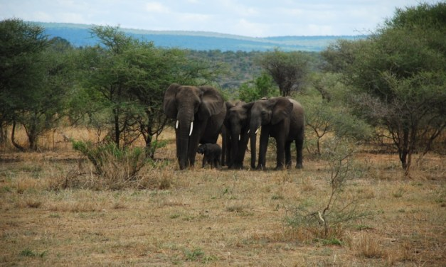Tarangire Safari 3 days
