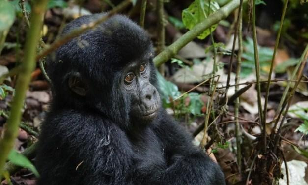 15 Day Rwanda, Kenya and Tanzania Safari