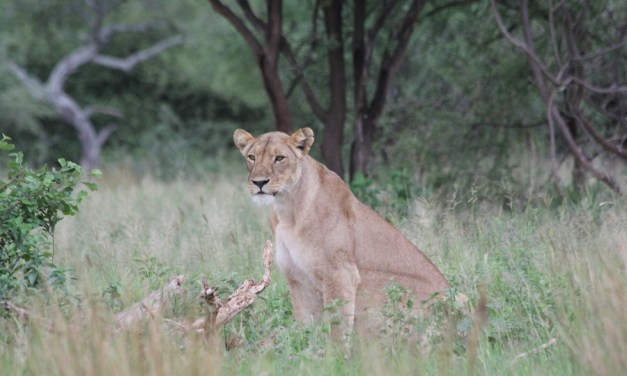 7 Day Safari, Manyara, Serengeti, Ngorongoro and Tarangire