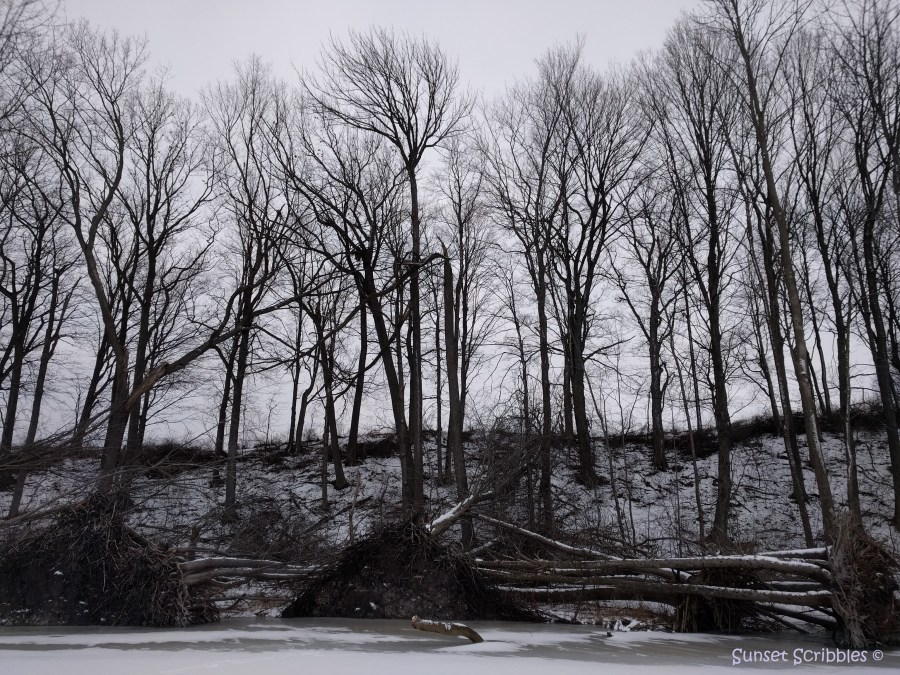 Winter activities - snow covered trees