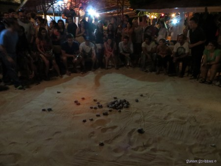 Crab races - The Owl - Grenada