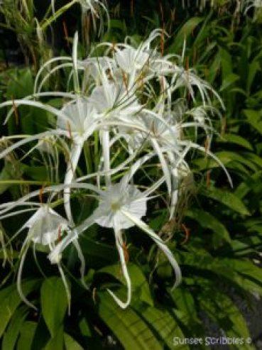 Singapore trip - flowers