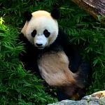 Fun Things to Do With Kids in DC: The National Zoo