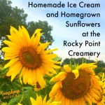 Visit the Rocky Point Creamery for Ice Cream, Stay for Sunflowers