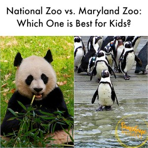 National Zoo vs. Maryland Zoo: Which One is Best for Kids?
