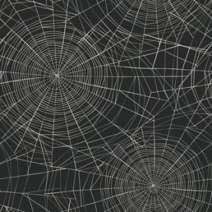 spiders Melbourne FL