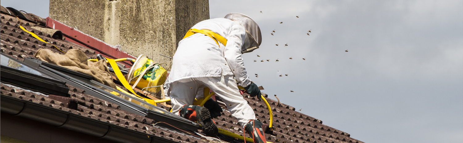 bee and wasp removal services offered