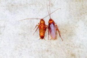 pest removal in brevard county