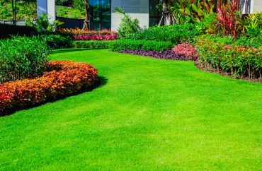green grass after pest treatment