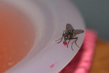 How to Prevent Flies