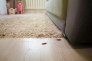 DIY Roaches