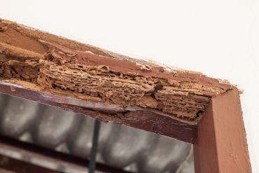 termite vs carpenter ants