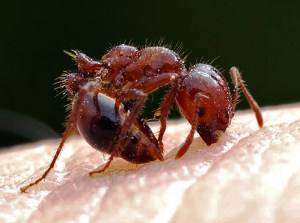 ant problem in Brevard County