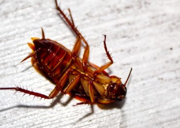 roach in home