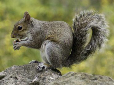 Keeping away squirrels