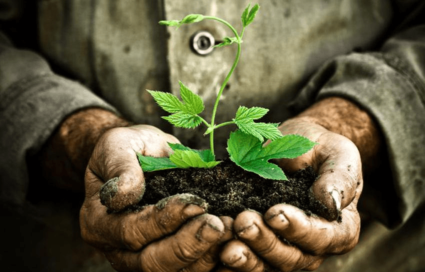 Survive to Thrive - Plant Growing in Hands