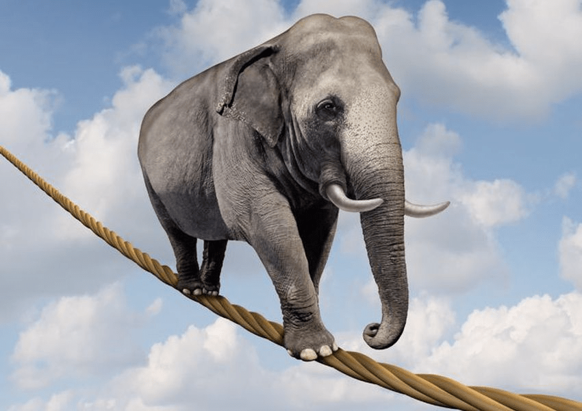 Elephant on Tightrope - Balance