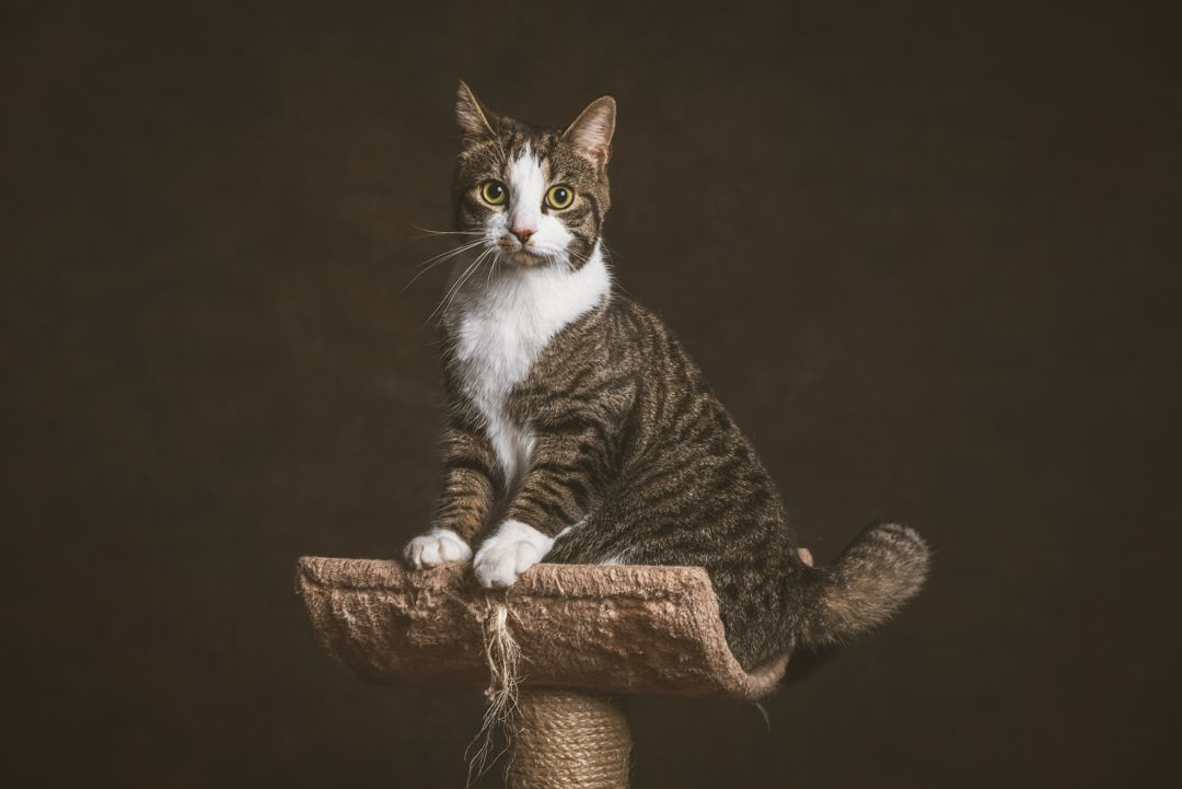 Maslow's Cat Sitting on Post - Top of Hierarchy