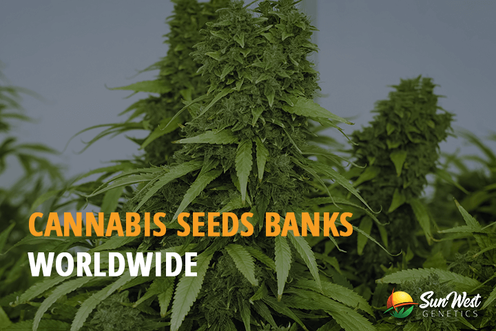 best boutique cannabis seed banks